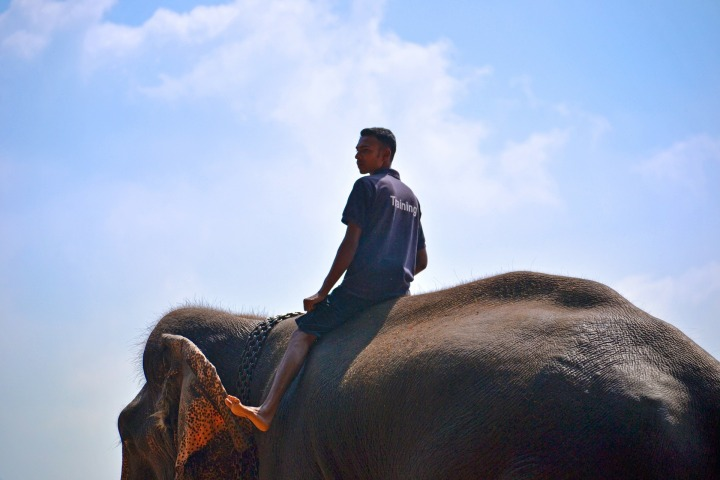 Why riding elephants should be banned
