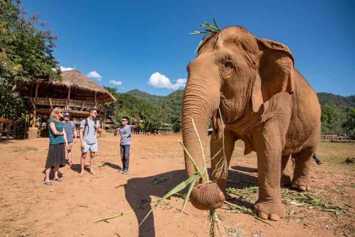 TravMedia_Australia_1297896_intrepid-elephant-nature-park-chiang-mai-4159